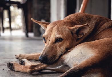 Hayvan Hakları Yasası'nda neler yok?