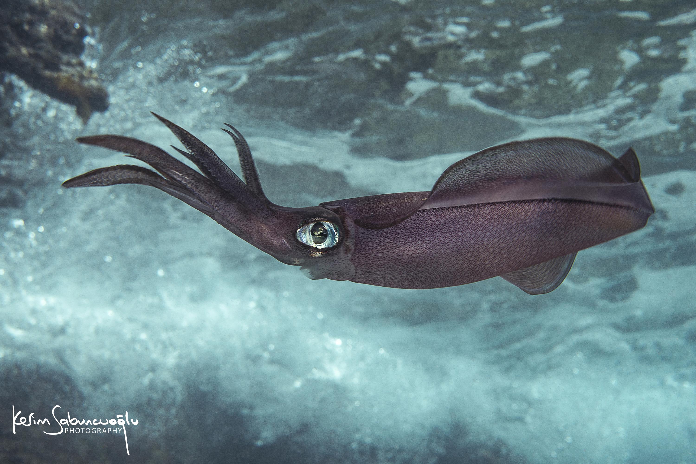 Denizlerin altının güzelliğini gösteren usta isim Kerim Sabuncuoğlu