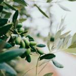 Temizlik ve kişisel bakımda zeytinyağının 9 farklı kullanımı