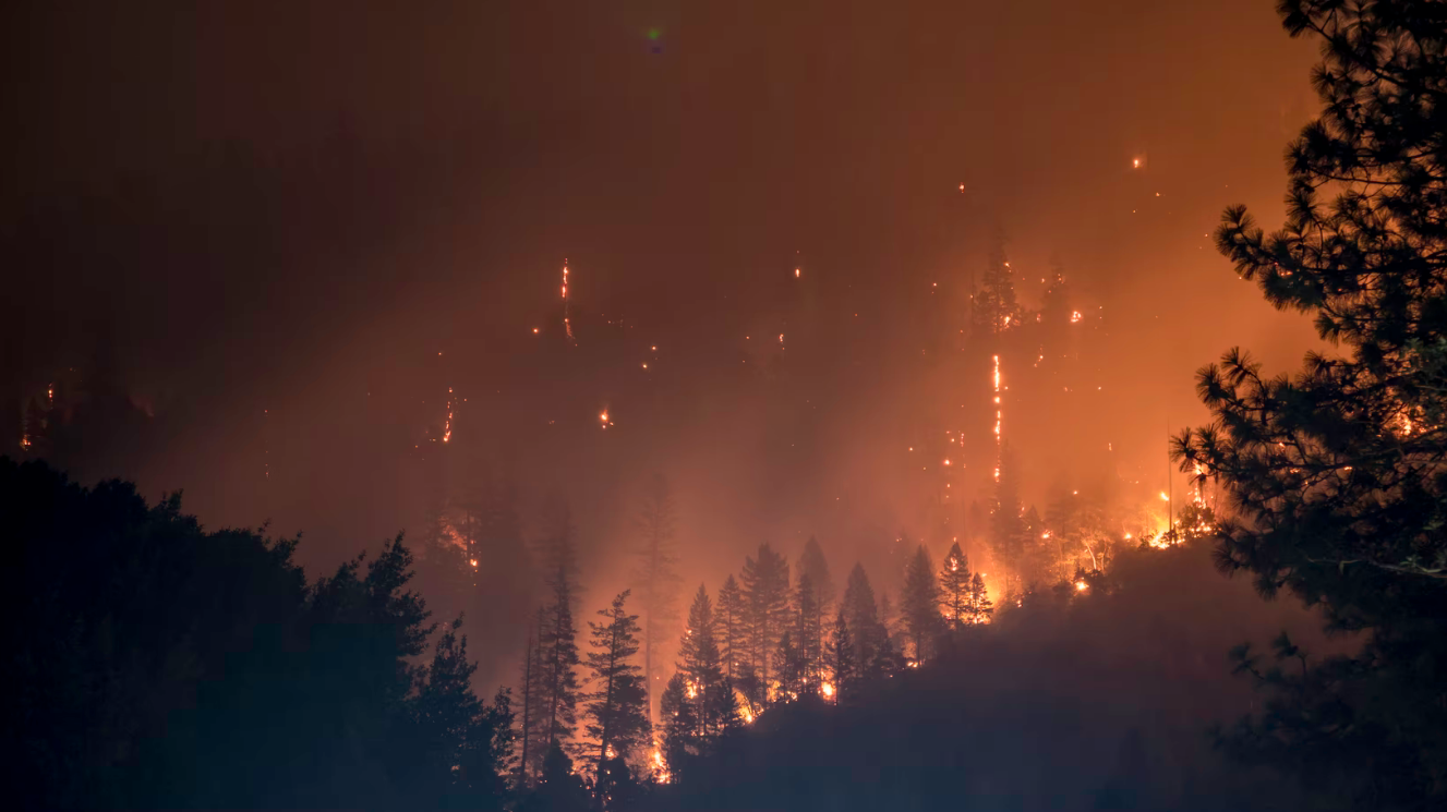 Sayıştay'ın Orman Genel Müdürlüğü denetiminden 5 çarpıcı bulgu