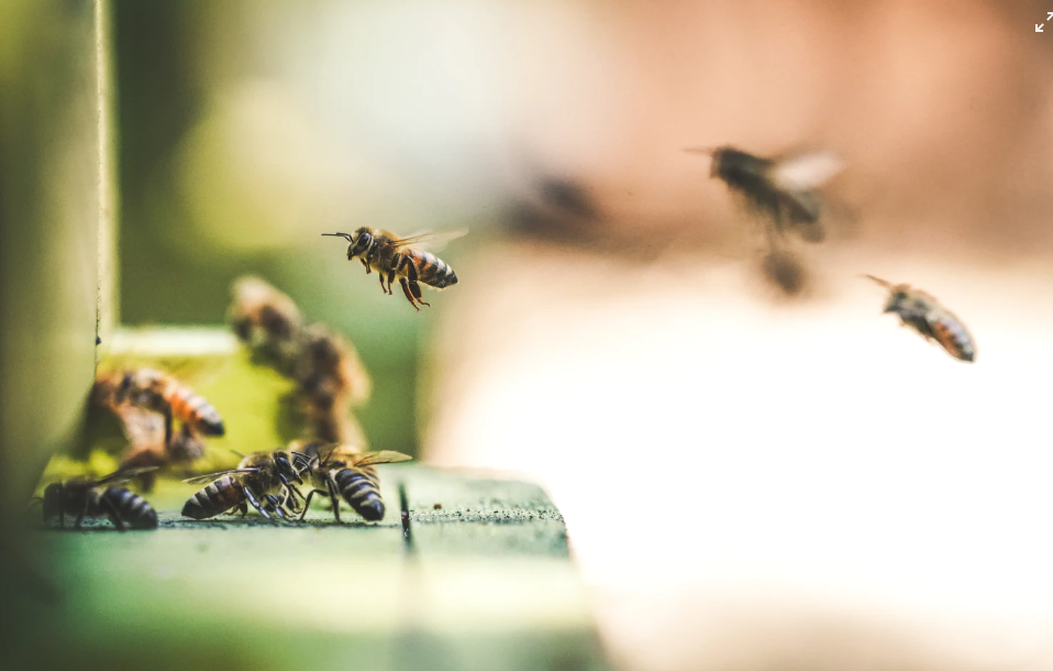Birden fazla tarım ilacı kullanımı arı ölümlerini büyük ölçüde artırıyor